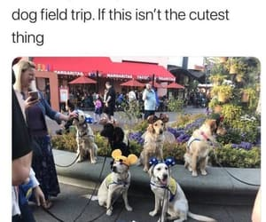 dog and funny image