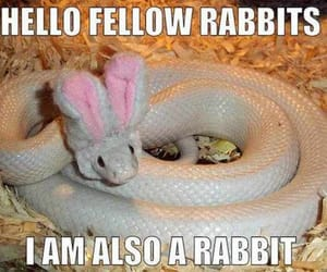 easter, snake, and cute image