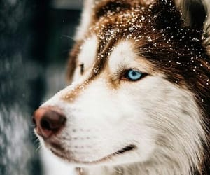 beautiful, dog, and white and brown image