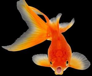 edit, fish, and kawaii image