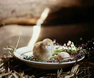 bird, rustic, and countryside image