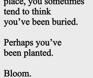 bloom, quotes, and dark image