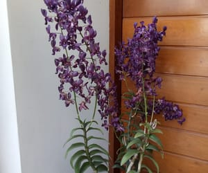 beautiful, casa, and orchid image