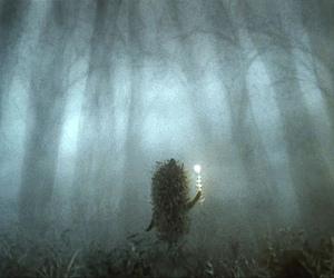 fog and hedgehog image