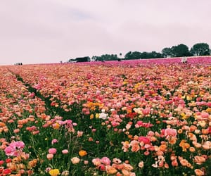 california, flower field, and spring image