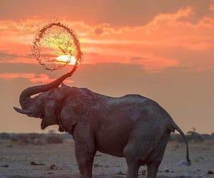 elephant, animal, and sunset image