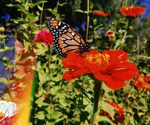 butterfly, flor, and flower image