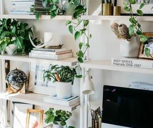plants, room, and decor image