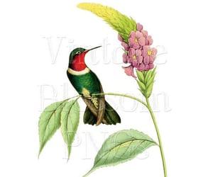 bird, bird graphic, and digital download image