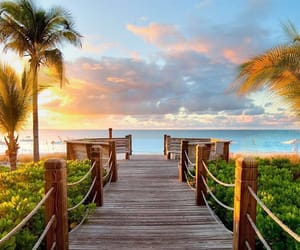 beach, ocean, and palm trees image