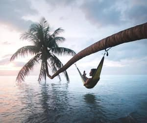 palm, paradise, and relax image