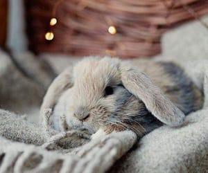 animal, bunny, and grey image