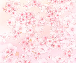 pink, sakura, and wallpaper image