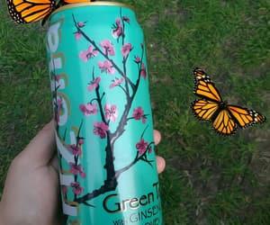 arizona, butterflies, and drink image