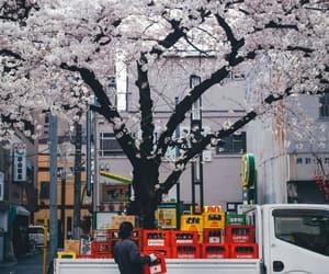aesthetic, sakura, and asian image