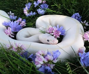 snake, flowers, and animal image