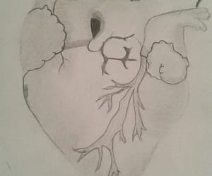 drawing, biologie, and heart image
