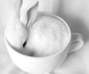 bunnies, easter, and white image