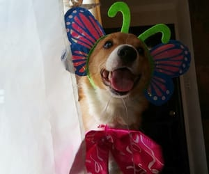 corgi, happyeaster, and happydog image