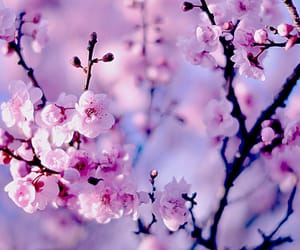 flowers, spring, and nature image