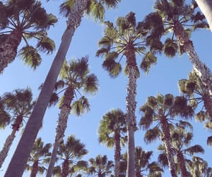 blue, california, and palm tree image