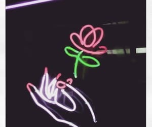 neon, light, and rose image