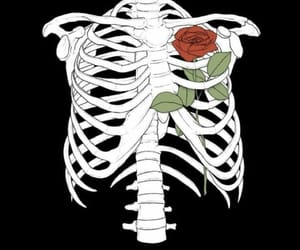 rose, skeleton, and wallpaper image