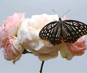 gif, butterfly, and flowers image