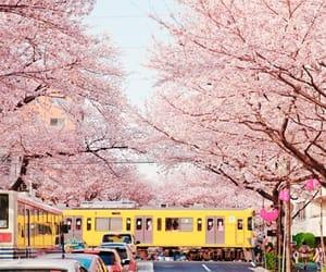 japan, sakura, and flowers image