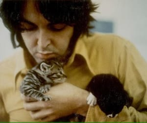 Paul McCartney, the beatles, and cat image