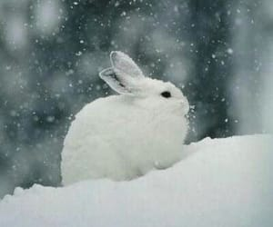 rabbit, snow, and white image