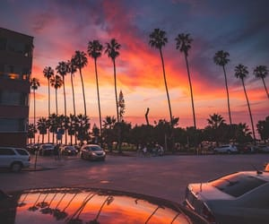 beautiful, palm trees, and photography image