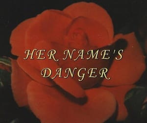 rose, danger, and red image