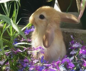 bunny, flowers, and rabbit image