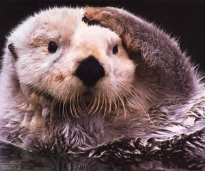 mammal, water, and sea otter image