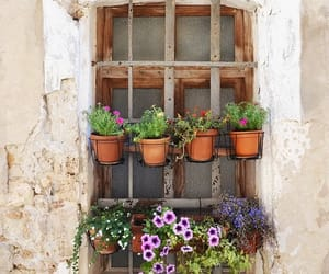 building, flowers, and italy image
