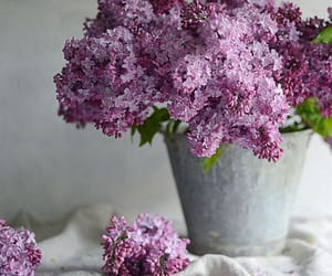 flower, flowers, and lilac image
