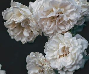 background, fondos de pantalla, and flores image