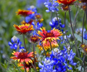 flowers, spring, and wildflowers image