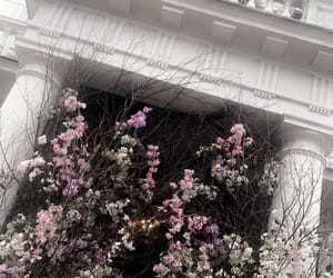 city, flowers, and london image
