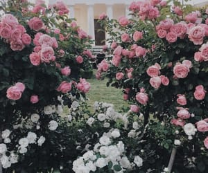 flowers, rose, and bushes image