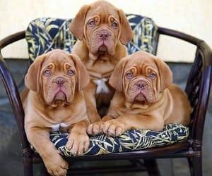 cachorros, perro, and ternura image