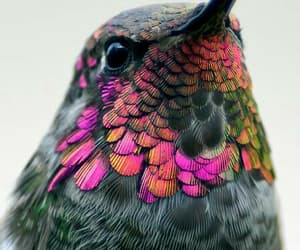 animals, hummingbird, and cute image