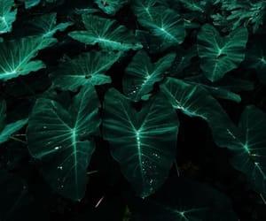 plants, aesthetic, and boho image