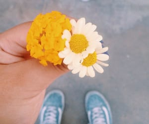 flower, flowers, and vans image