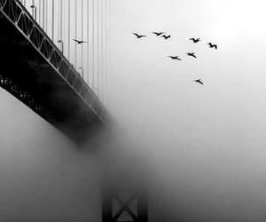 bird, bridge, and black and white image