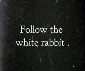 alice in wonderland, black, and follow the white rabbit image