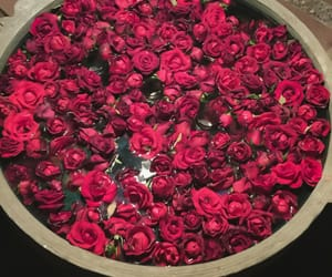flowers, beautiful, and red image