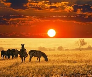 zebra, animal, and africa image