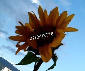 bored, sunflower, and snapchat image